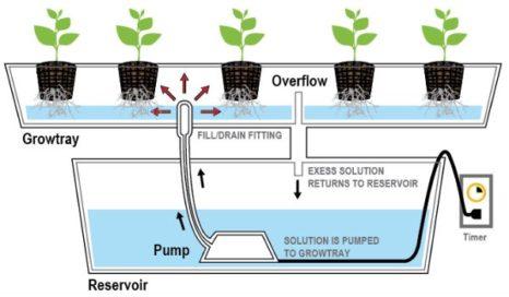 hydroponics flood and drain