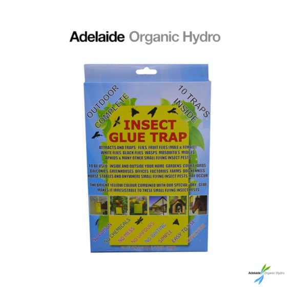 Insect Glue Trap - 10 Sticky Traps Insect Pesticide