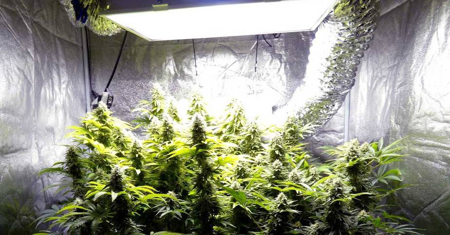 Top Questions About Hydroponics Answered 3